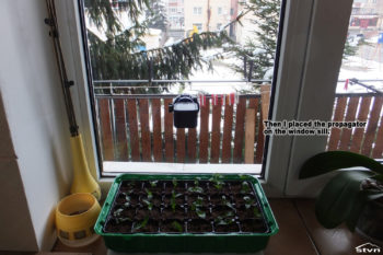 Then I placed the propagator on the window sill.