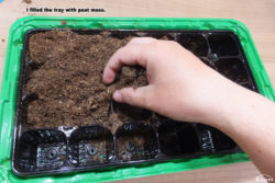 I filled the tray with peat moss.