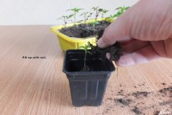 Fill up with soil.
