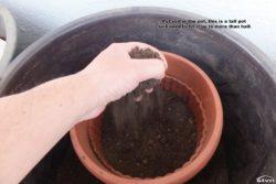 Put soil in the pot.