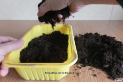 Put potting soil in the seed tray.